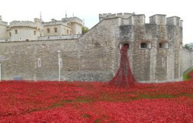 The poppies at The Tower of London. Photo by Judith McLaren