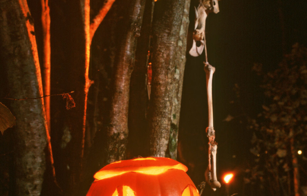 Samhain will be celebrated at the Scottish Crannnog Centre on October 31. Photo P Tomkins/VisitScotland/Scottish Viewpoint