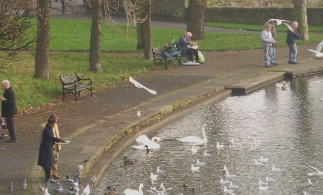 Inverleith Park's pond
