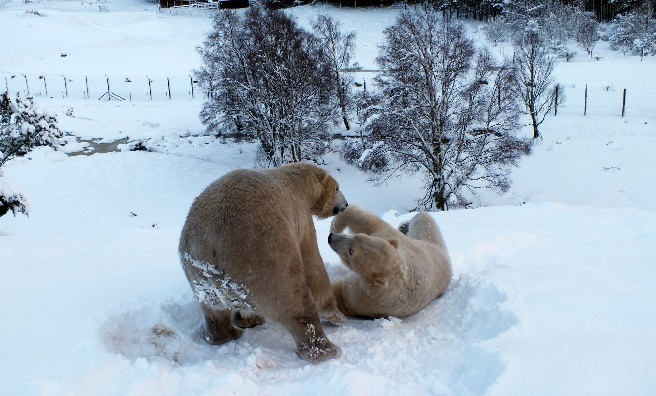 Snow wrestling! Photo by Jan Morse