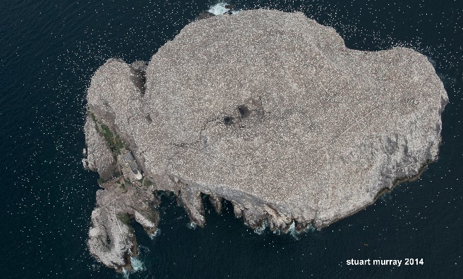 An aerial view of the Bass Rock gannet colony. Photo by Stuart Murray