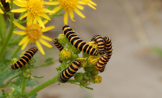 Winner of the Junior 12-16 category: Jazzy Caterpillars by Jocelyn King.