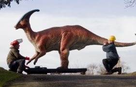 The Parasaurolophus is carefully manouvred into his spot on the hill at Edinburgh Zoo