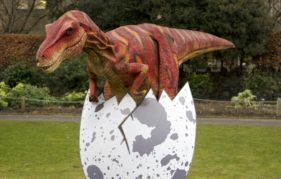 Velma The Velociraptor hatches out of her egg to make her first appearance at Edinburgh Zoo