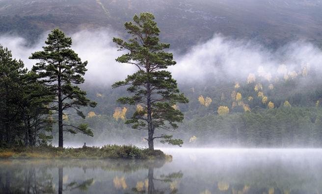 Scots Pine, Loch an Eilein (Pic: Alamy)