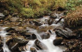 Water flowing over rocks in Puck's Glen (Pic: Alamy)