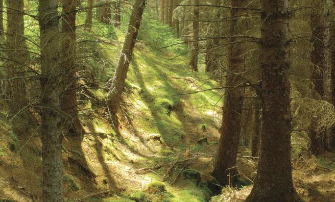 Glenmore Forest, Cairngorms National Park (Pic: Shutterstock)