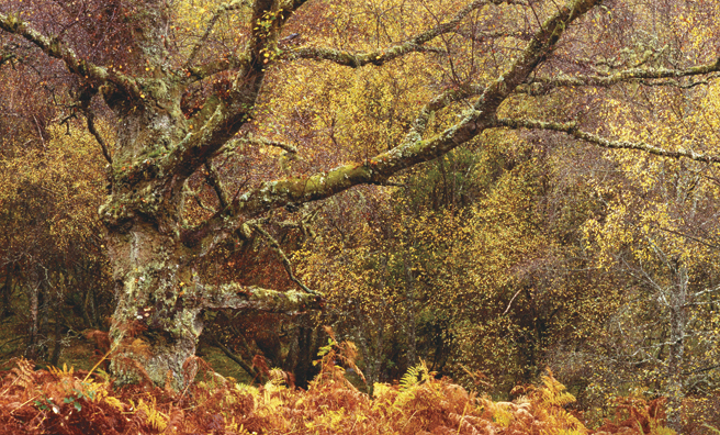 Deciduous woodland and rivers attract the species