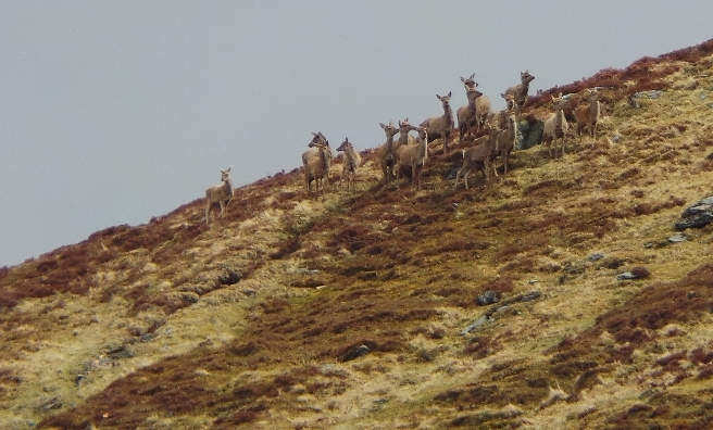 Standing guard over their hill!
