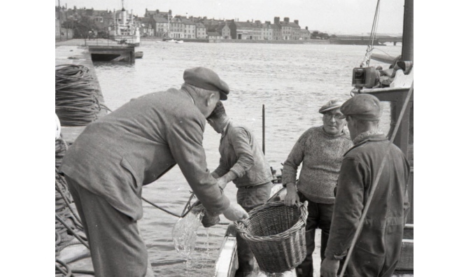 Landing fish at Montrose Harbour. Photo courtesy of Angus Archives.