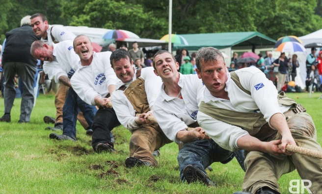 The pulling power of these strong men's in no doubt! Photo by Barry Robb
