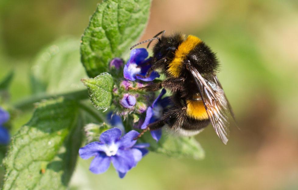 Encourage bumblebees in your graden. Pics: Shutterstock