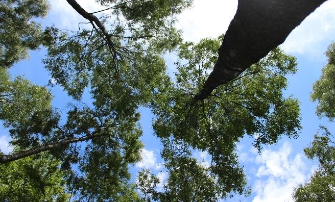 Topsy Tuvy Trees by Freya Sanders. Courtesy of Scottish Seabird Centre Nature Photography Awards