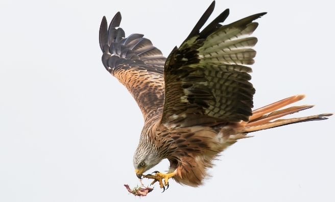 One Fell Swoop by Sue Dudley. Courtesy of Scottish Seabird Centre Nature Photography Awards