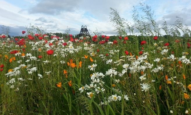 Summer Flowers by Yasmine Piening. Courtesy of Scottish Seabird Centre Nature Photography Awards