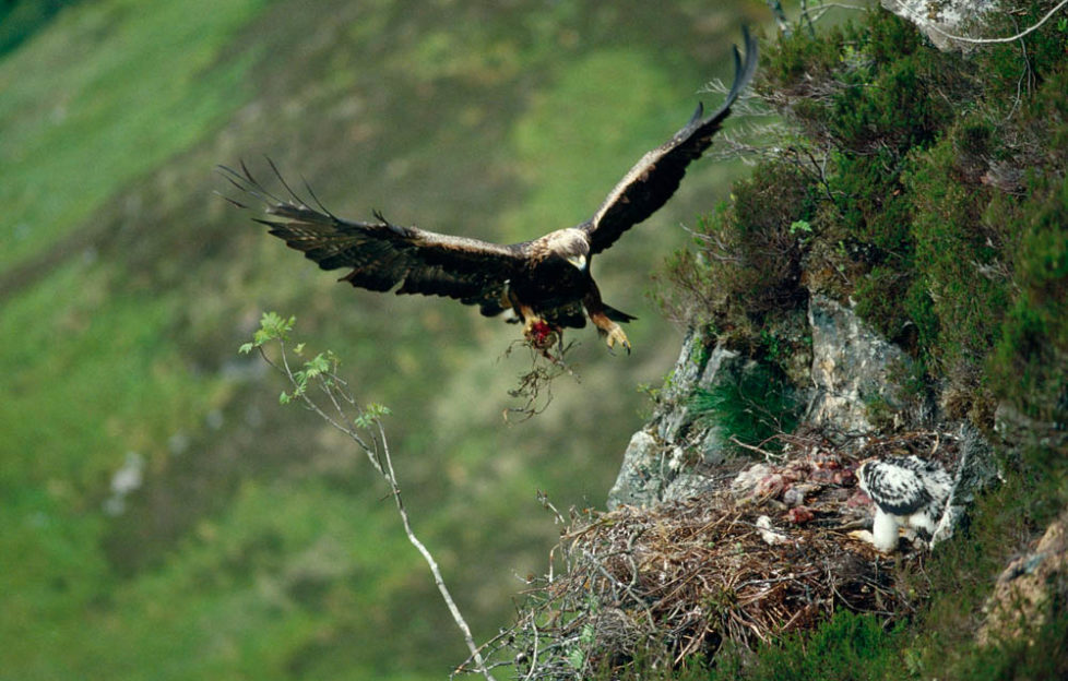 Amazing wildlife shots from new photography book Scotland's Wild Heart