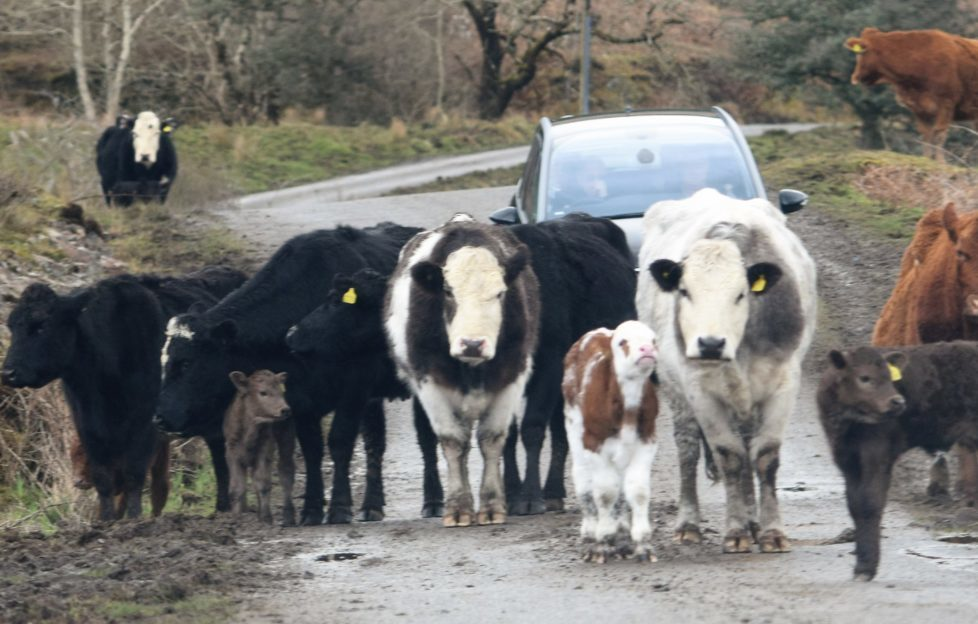 Even the road obstacles are a friendly bunch!