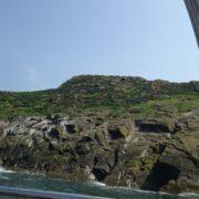 Craigleith Island - spot the puffin!