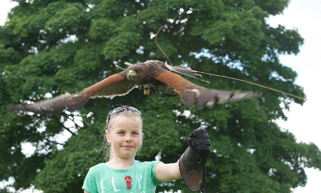 Birds of prey will swoop into action at this year's Scottish Game Fair. Pic by ROB MCDOUGALL