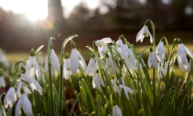 Snowdrops and sunshine at Hopetoun House, South Queensferry. Photo courtesy of Discover Scottish Gardens