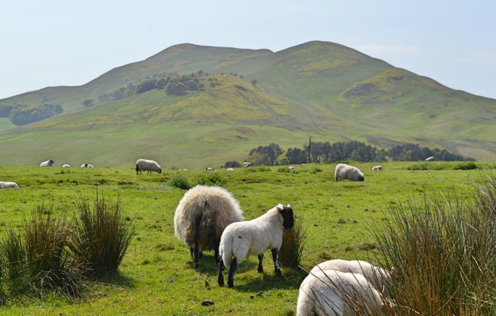 Escape to the country with a trip to the Pentlands!