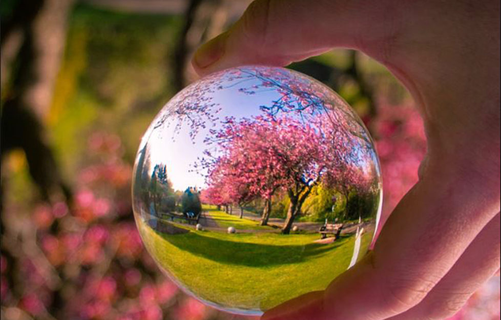 """""""Check out the blossom in Leven, Fife."""" John Murray, @johnmurrayjnr on Twitter."""