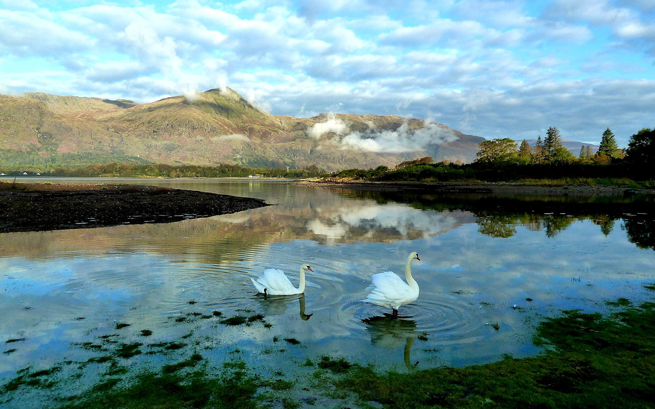 """A splendid morning for a swan swim in Lochlinnhe."" Mike Wood, @MikeMikwd."